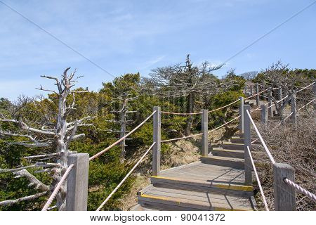 Landscape With Yew Trees At Yeongsil Trail