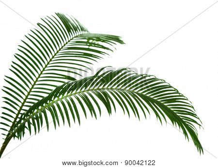 Green palm branches on light background