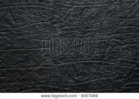 Wrinkled Skin Surface