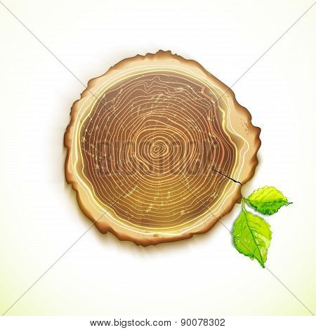 Vector Drawing Tree Stump With Leaves