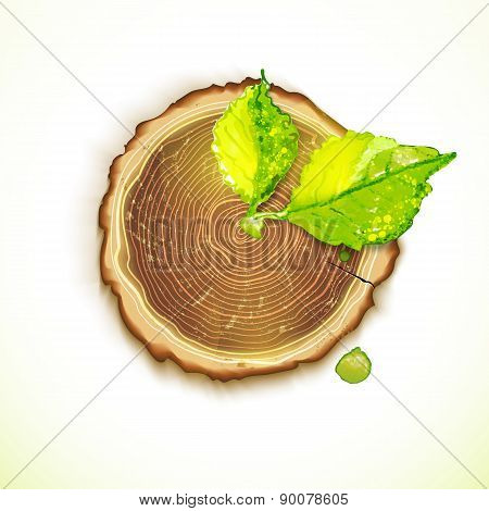 Vector Drawing Wooden Clock With Tree Stump And Leaves