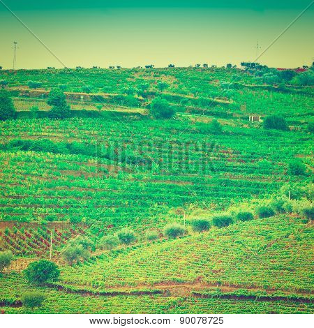 Hills Of Portugal