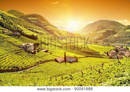 Beautiful Sunset View Over A Vineyard In Italy