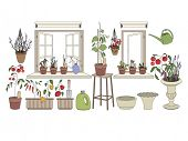 Flower pots with herbs and vegetables. Gardening tools. Plants growing on window sills and balcony poster