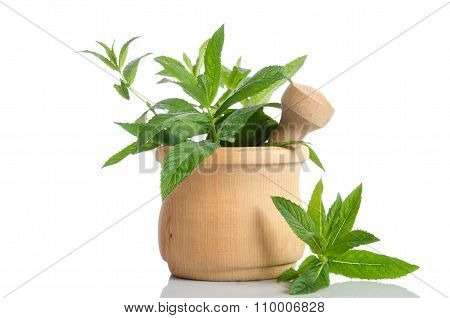 Fresh Green Mint In Wooden Mortar On White Background