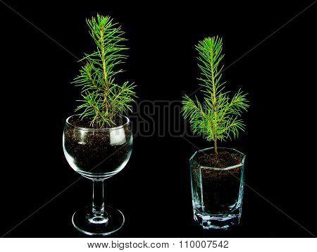 small Christmas tree ornaments