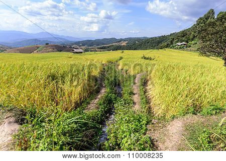Terraced Rice Field With Irrigation Canal At Ban Pa Bong Piang, Chiang Mai In Thailand.