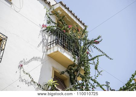 traditional Andalusian streets with flowers and white houses in Marbella, Andalucia Spain