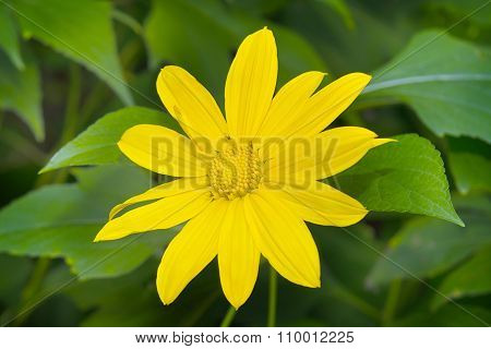 Yellow flower in the upper part of Thailand