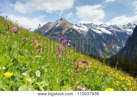 Mountain flower meadow in the Tyrolean Alps