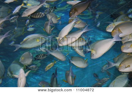 Tropical fish in Thailand.