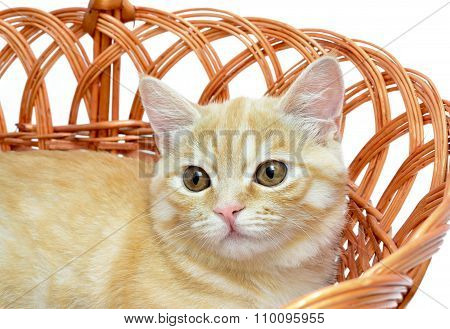 Young Yellow Cat Sitting In A Wicker Basket