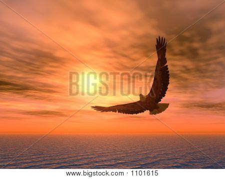 Eagle_Variant
