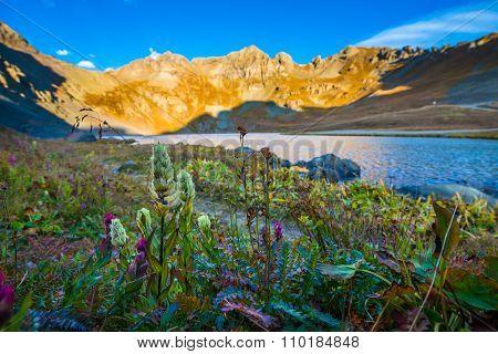 Wild Flowers Clear Lake Near Silverton San Juan Mountains