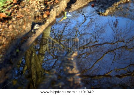 Trees In The Mud