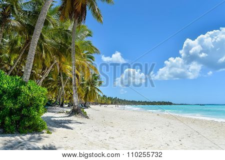 Sandy Caribbean Beach With Coconut Palm Trees..