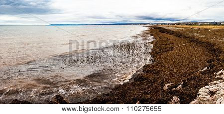 Seaweed Panorama of the Gaspe Peninsula in Quebec Canada during Cloudy Cold Autumn Day