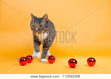Cat With Red Christmas Balls