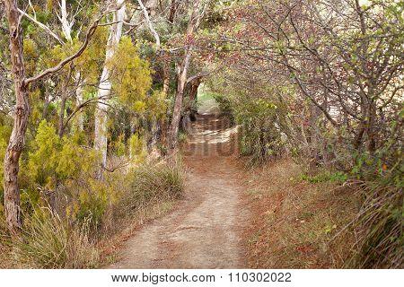 Bush Walking Track