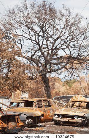 Bushfire Aftermath