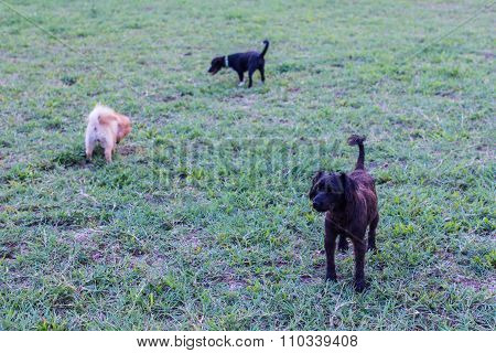 Black Stray Dog In Lawn With Frend Dog