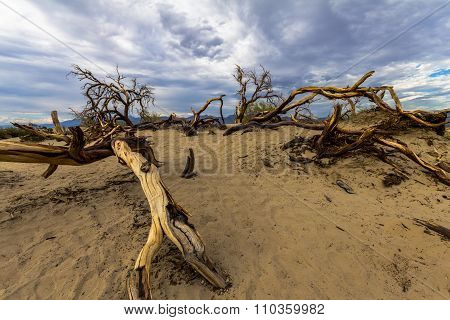 Dead wood in the sandy desert of Death Valley, USA poster
