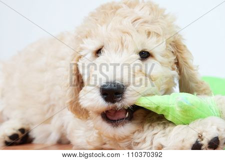 Puppy Chewing Toy