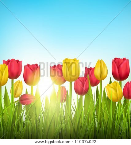Green grass lawn with tulips and sunlight on sky. Floral nature