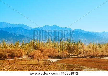 Holy Fish Pond, Shey Monastery, Leh Ladakh, India.