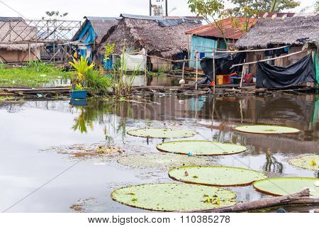 Lily Pads In A Slum