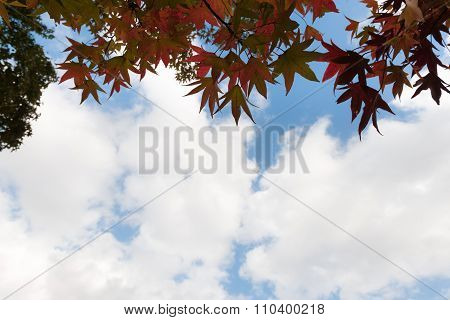 Autumn Tree With Blue Sky Tunnel