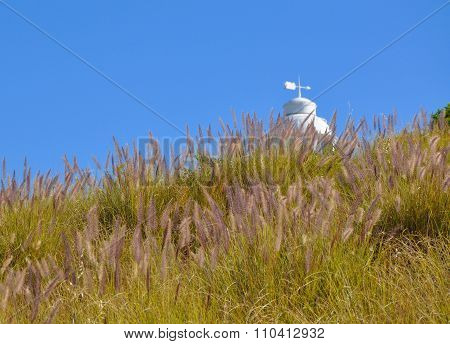 Purple Grasses: Hint of a Lighthouse