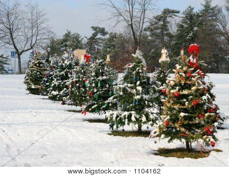 Christmas Trees 005