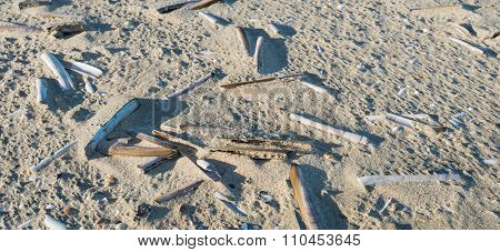 Empty Atlantic Jackknife Clam Shells In The Sand