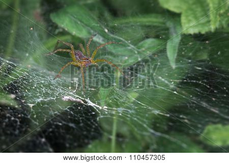 Scary Spider Lurking In Its Web