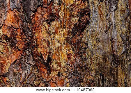 Pine Bark Background.