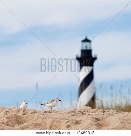 Shore Birds And Cape Hatteras Lighthouse Nc Us