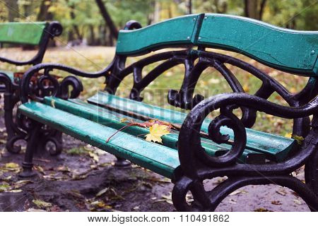 Maple leaves on a park bench