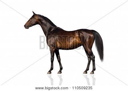 Exterior horse