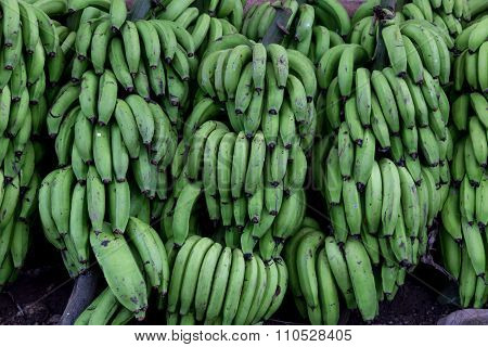 Green Banana Group On Market