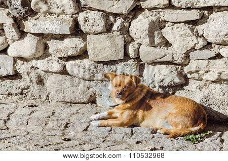 Old Little Dog