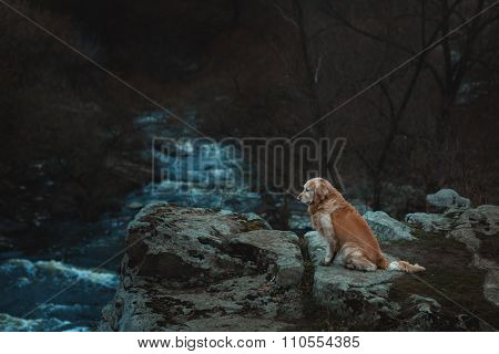Sad Dog Is Sitting On The Edge Of A Precipice.