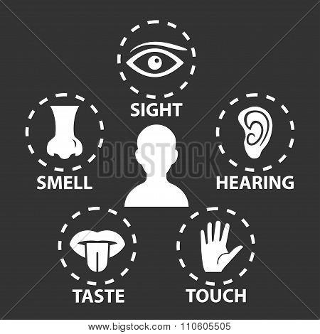 Five senses icon set. Vector illustration.Human organs poster