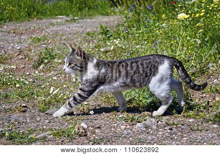 cat walking in the nature