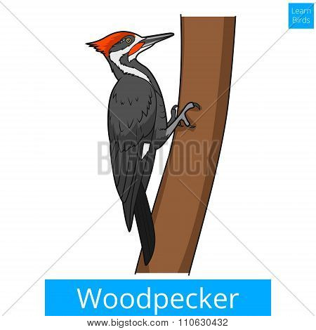 Woodpecker learn birds educational game vector