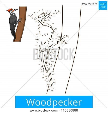 Woodpecker bird learn to draw vector