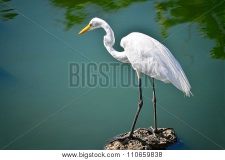 White Heron Stands On A Rock Near A Lake
