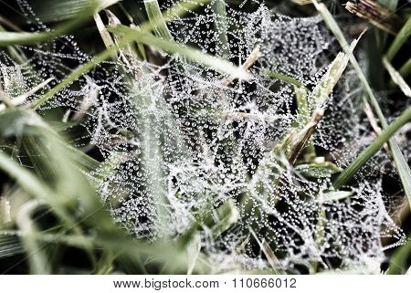 Macro - Water Drop On Spider Web In The Morning.