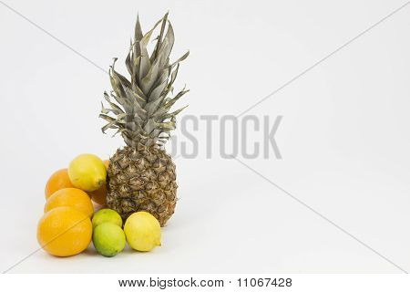 Citrus Fruit Arrangement Landscape