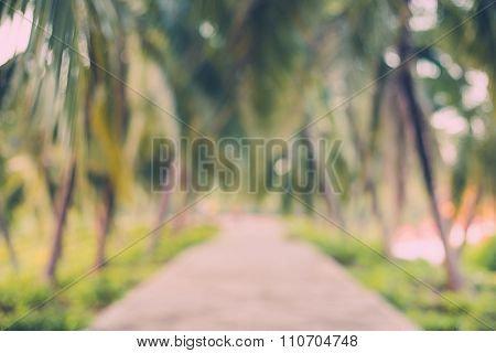 Abstract Blur Coconut Palm Tree In Garden With Vintage Tone